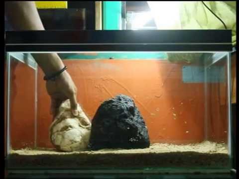 goldfish aquarium design 01 by ilham youtube