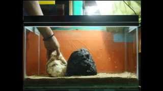 Goldfish Aquarium Design 01 By Ilham