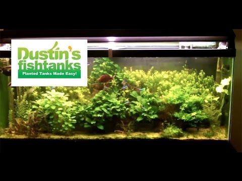 55 gallon planted aquarium last shot of steve 39 s 55 youtube for Dustins fish tanks