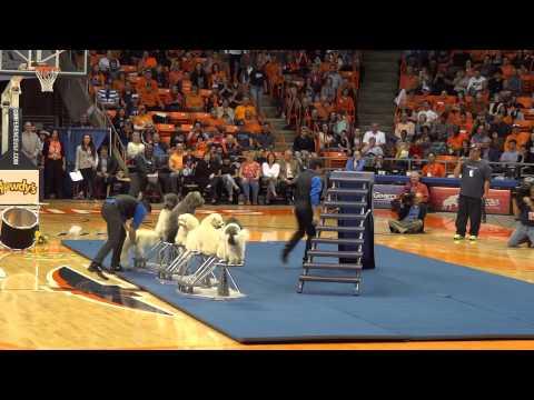 Dog Tricks at the UTEP Basketball Halftime Show