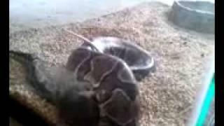 video-2011-02-22-12-39-10