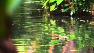 Panning Shot Of Botanical Gardens Water And Vegetation.