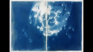Cameraless, Lensless: Vanessa Albury's Cyanotypes