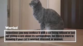 Cat Tail Meanings