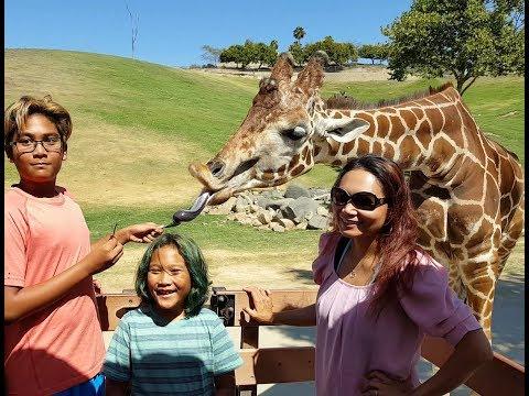 San Diego Zoo Safari Park - Caravan Safari With Wild Animals thumbnail