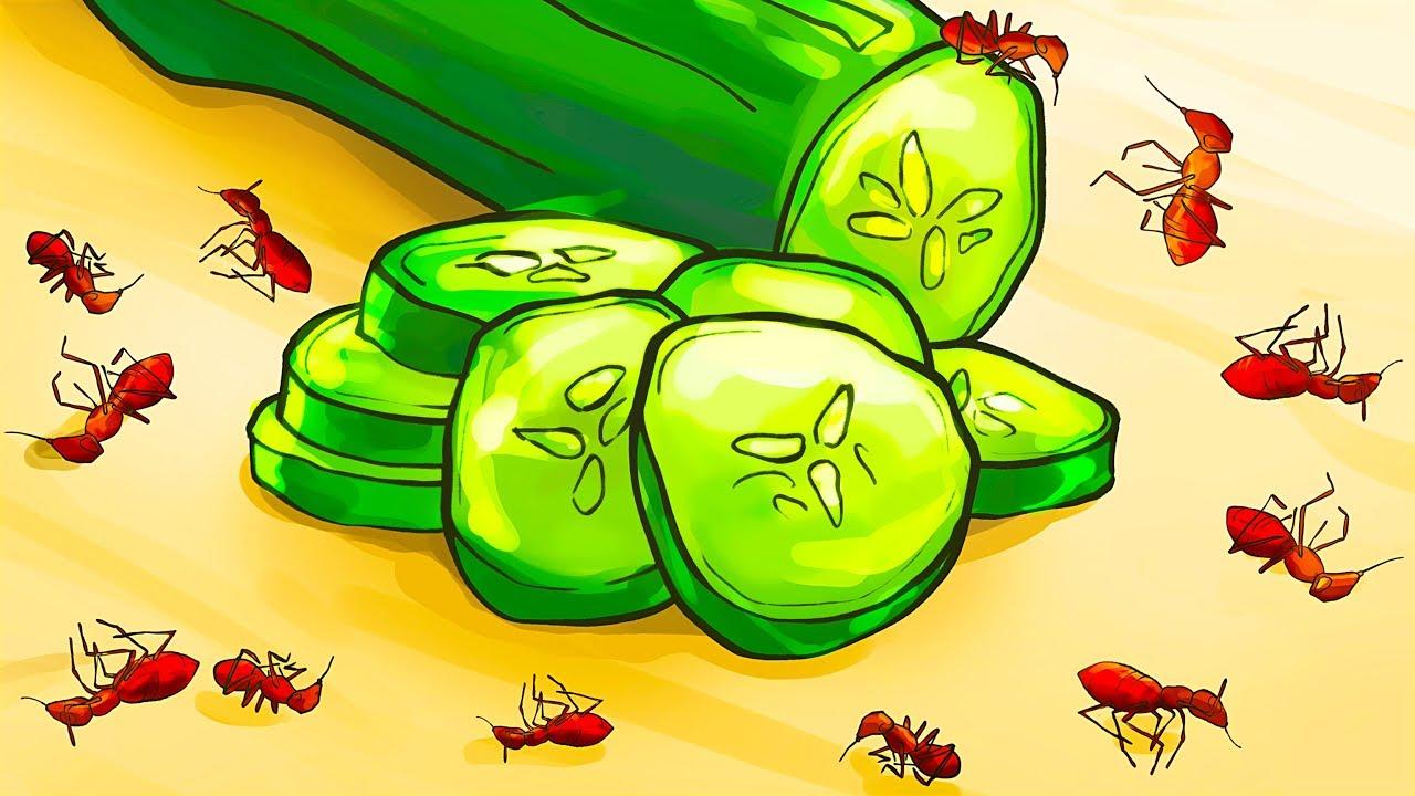Những cách tốt nhất để loại bỏ kiến trong ngôi nhà của bạn