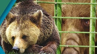 Bear is Rescued from Harrowing Captivity | Earth Unplugged thumbnail