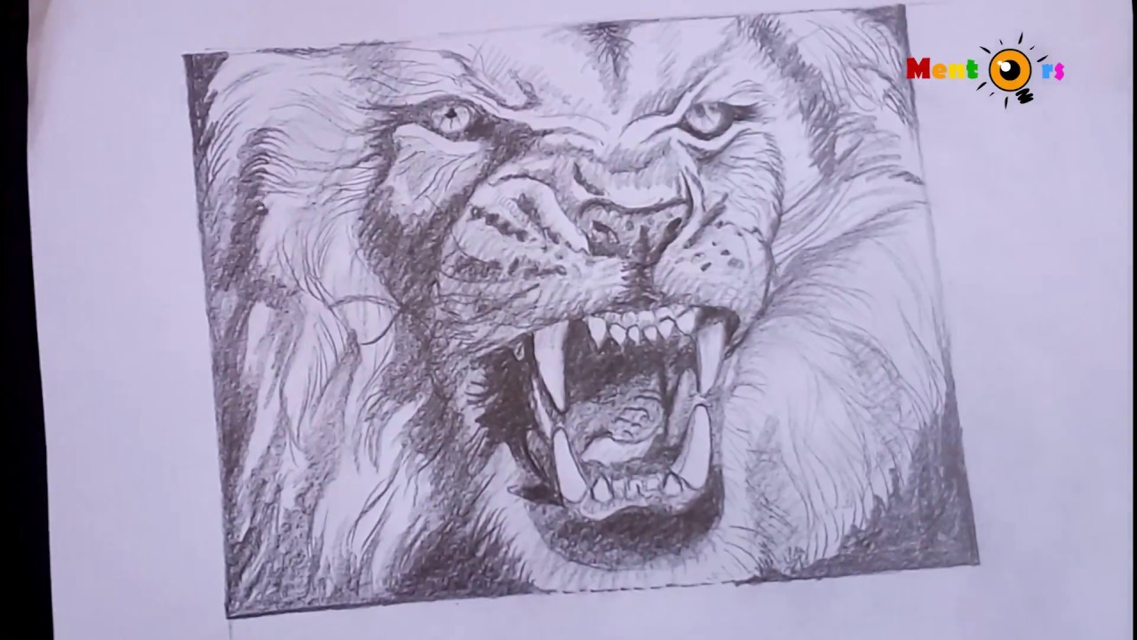 Learn shading epic lion roar drawinglion king timelapse wild angry lion by mentors
