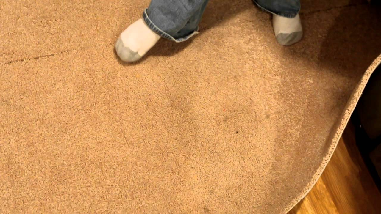 how to check for mold in carpet