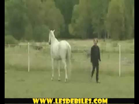 NEW AND EXCLUSIVE GUY GETS OWNED BY HORSE