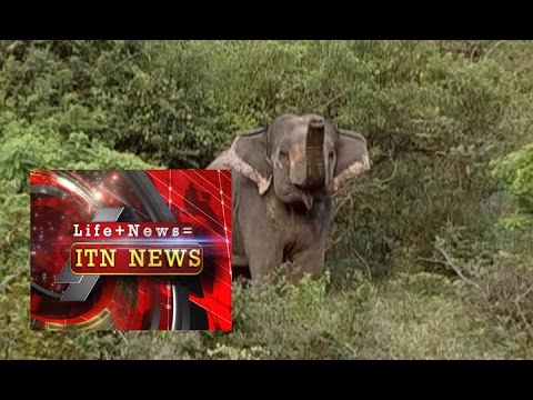 HUMAN-ELEPHANT CONFLICT  [ Life + News = ITN NEWS ]