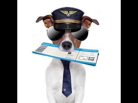 Сколько стоит перевоз животного за границу и необходимые документы. Расписываем действия по шагам.