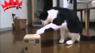 『爆笑影片』貓咪精采搞笑剪輯 ~funny videos