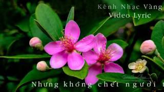 [Nhạc Vàng] Chuyện Hoa Sim - Đan Nguyên (Video Lyric)