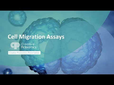Cell Migration Assay