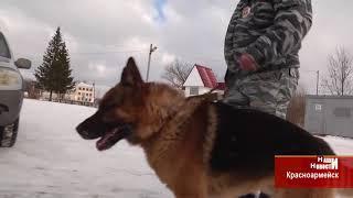 В Торбеевском районе собака помогла раскрыть кражу