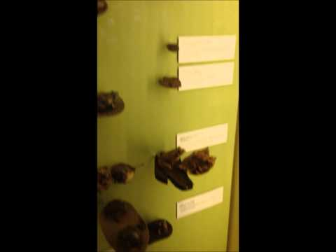 Brisbane Queensland Museum Discovery Centre - July 3, 2014