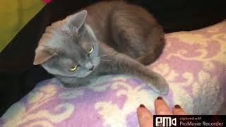 Ревнивая кошка злючка))))