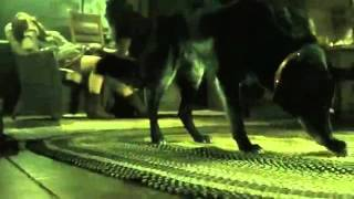 Обзор фильма  Зловещие мертвецы  Чёрная книга