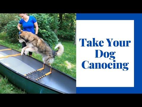 Teach Your Dog To Love Your Canoe Or Kayak
