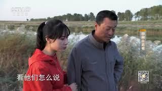 《田间示范秀》 20200105 一泓清水鳜鱼肥|CCTV农业