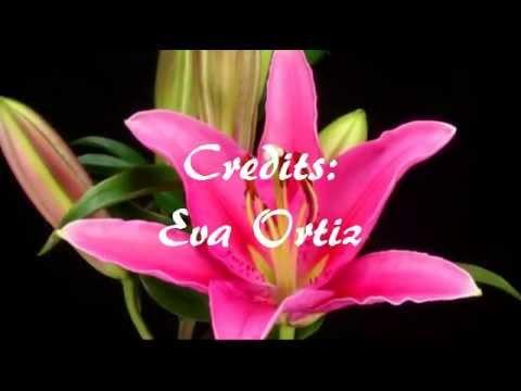 Musica Cristiana ..TENGO A MI CRISTO { EVA ORTIZ}