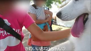 心ウキウキ夏祭り☆彡 たくさんのやさしい人に撫で撫でしてもらってうれ...