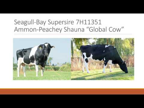 53rd UF Dairy Production Conference - Greg Andersen (Seagull Bay Dairy)