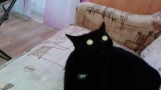 Черный кот с горящими зелеными глазами. grüner monsterkatze