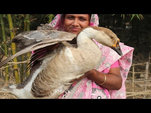 village-food-cooking-5-kg-goose-delicious-spicy-goose-recipe-village-style-how-to-cook-duck-curry