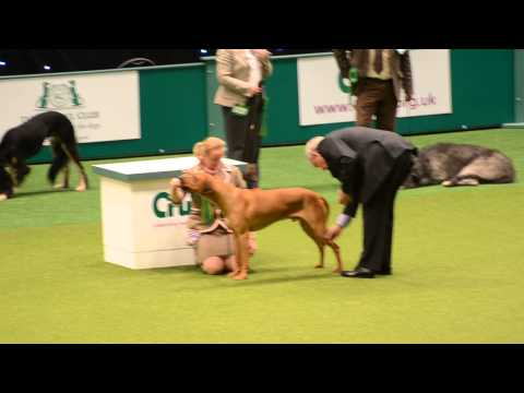 "The ""best in breed"" Rhodesian Ridgeback @ Crufts 2014 [07-03-2014]"