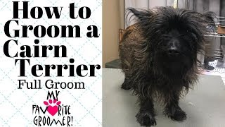How To Groom a Cairn Terrier