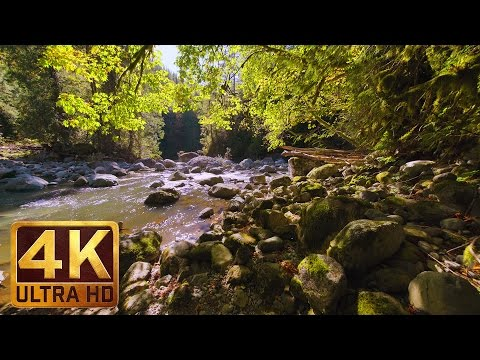 Virtual Forest Walk in 4K | 2 HRS Relaxation Video with Nature Sounds - WATER & FOREST - Part 4