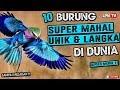 Mahalnya Kebangetan  Burung Paling Mahal Di Dunia  Mp3 - Mp4 Download