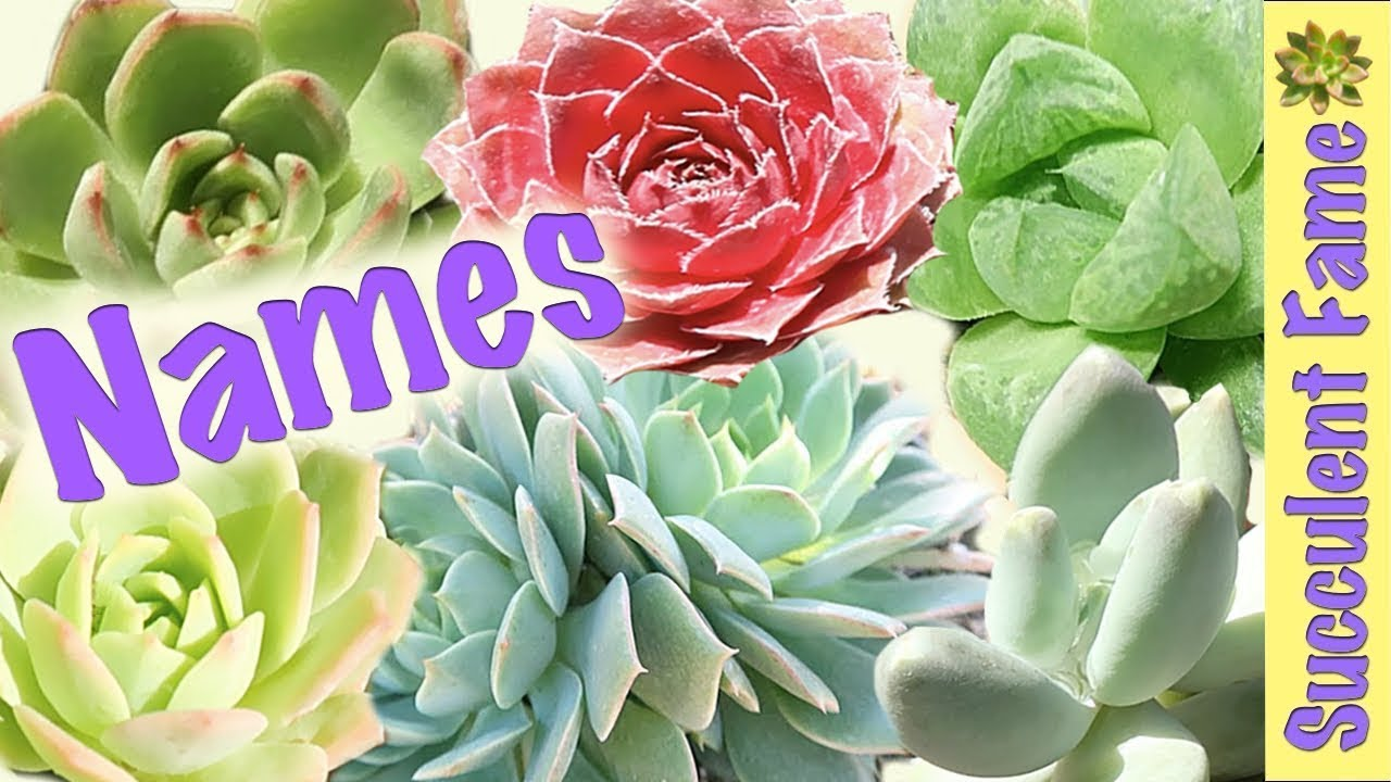 Useful Succulent Identification Names Of Succulents Youtube
