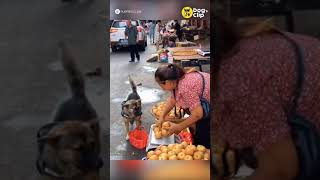 น้องหมาซื้อแอปเปิ้ล | Dog's Clip