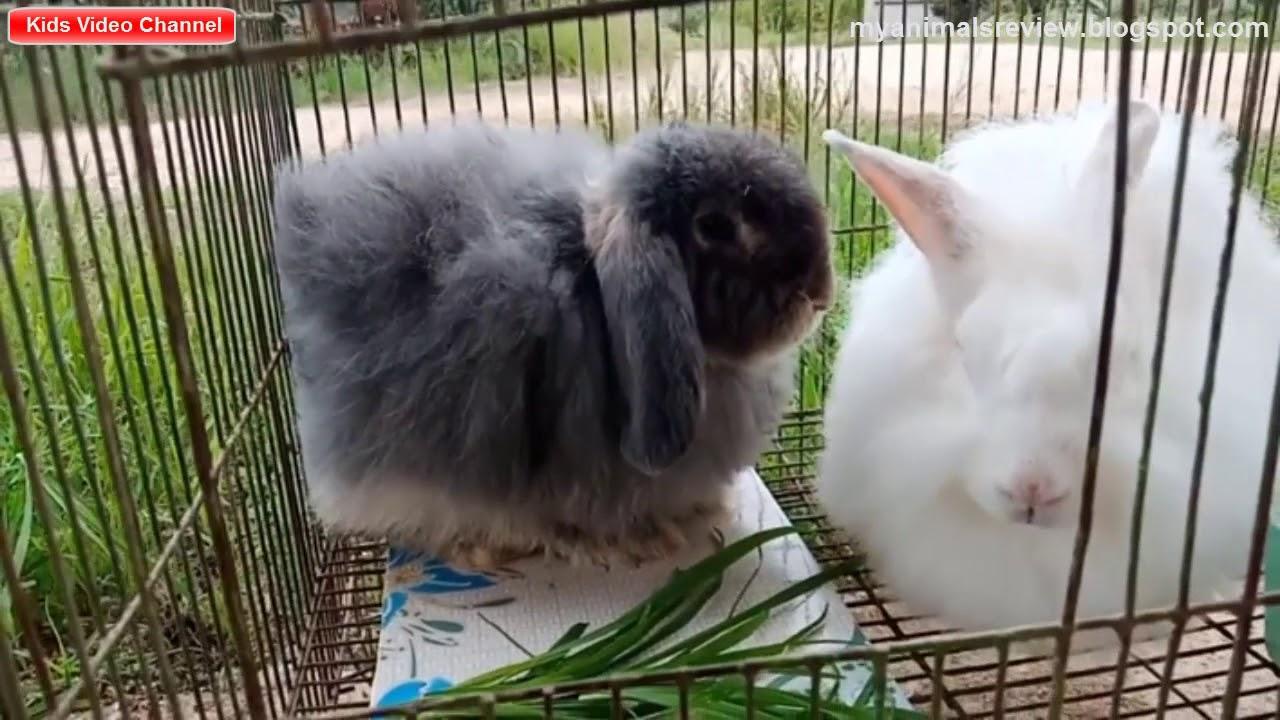 Asian rabbit review photos 995