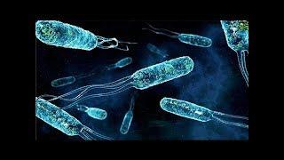 Невидимая жизнь. Введение в микробиологию