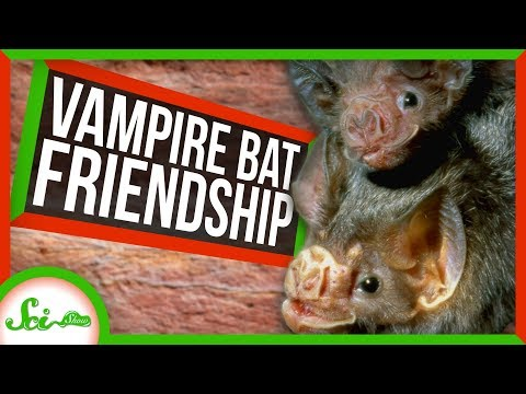 New Cancer Drug Results and Vampire Bat Friendships