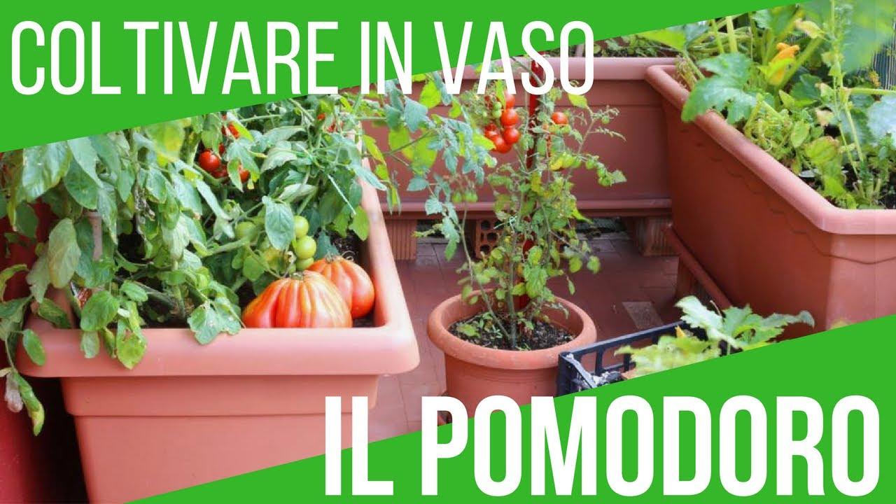 Come Coltivare Pomodori Sul Balcone orto sul balcone: coltivare pomodori in vaso | orto e giardinaggio | orto e  giardinaggio