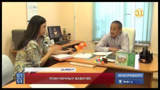 Казахстанские путаны рассчитывают заработать на ЭКСПО