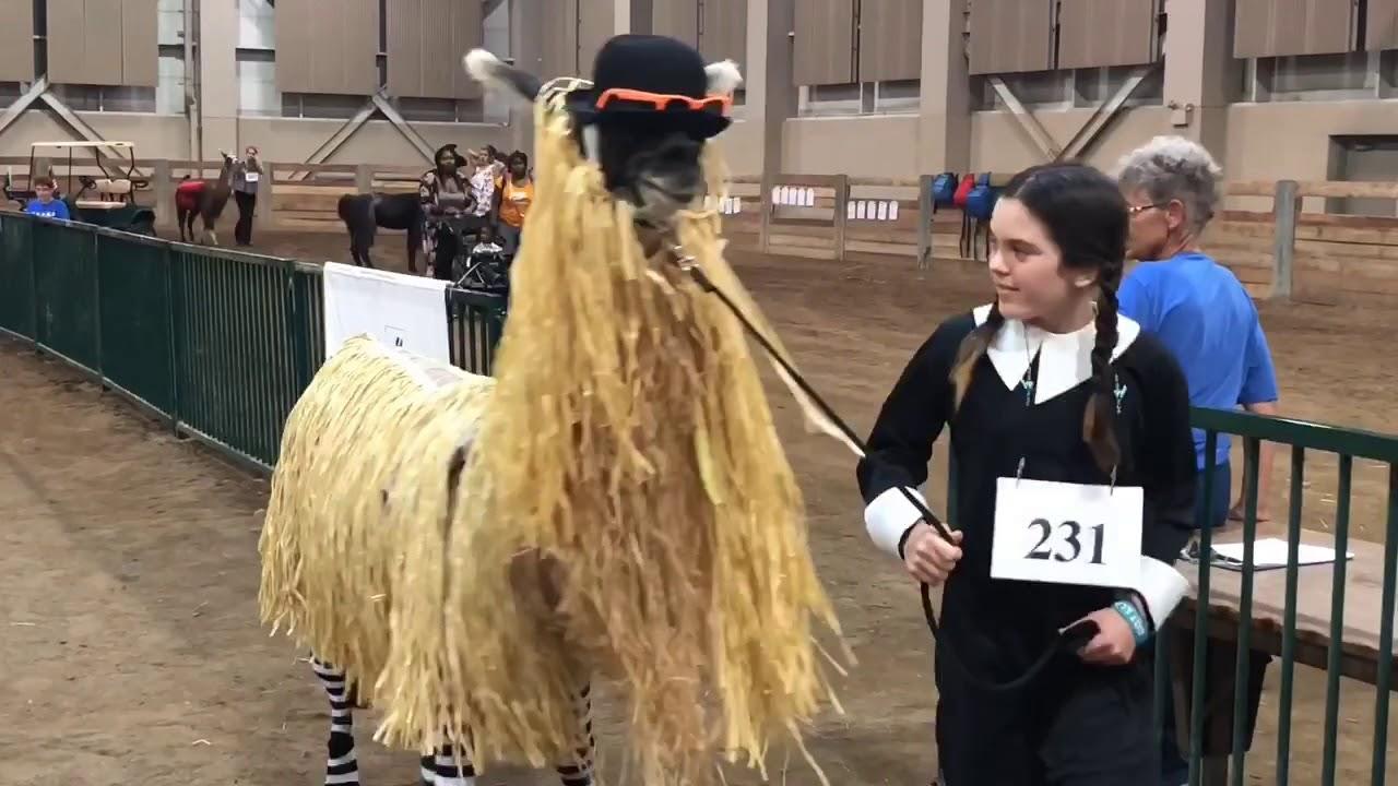 Llama costume contest at Lamafest 2018