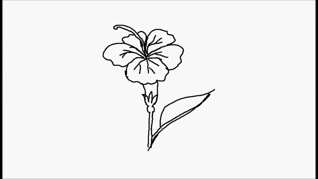 How To Draw Hibiscus Flower For Alekhan Design Youtube