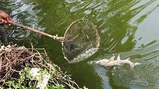 Рибалка Як Супермен Ніколи Не Бачили Раніше | Риба Спіймана Якір Гак