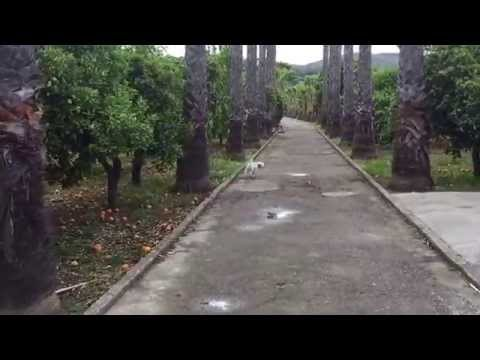 dog-walk-in-beautiful-orange-groves-andalusia