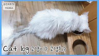 16살 노령묘 슈는 자율급식 중♡ 페르시안 친칠라 고양…