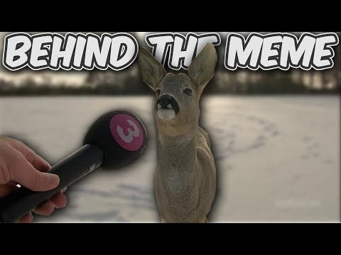why-is-this-deer-being-interviewed?-|-behind-the-meme