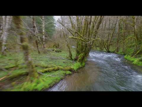 A short tour of the Tillamook State Forest
