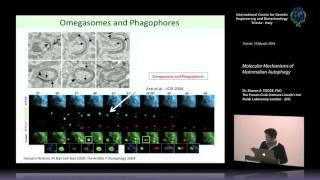 S. A. Tooze - Molecular Mechanisms of Mammalian Autophagy