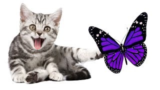 Butterfly on the screen to make fun with cat | cat game